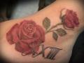 Rosa en colores